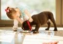 Quel équipement acheter pour accueillir un chien ?