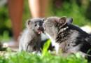 Adopter un chat : quel conseil avec bébé ?