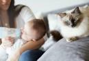 Chat/accouchement : comment gérer l'arrivée de bébé ?