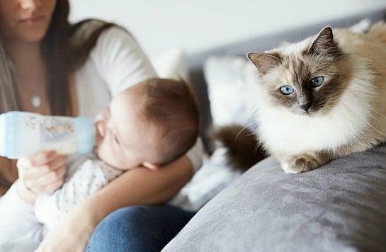 chat rencontre femme enceinte